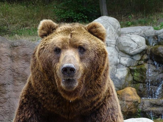 ZOO Brno - medvěd